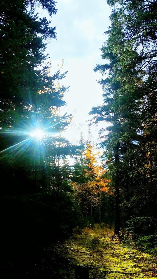 早晨联合国阿拉斯加灌木 免版税库存照片