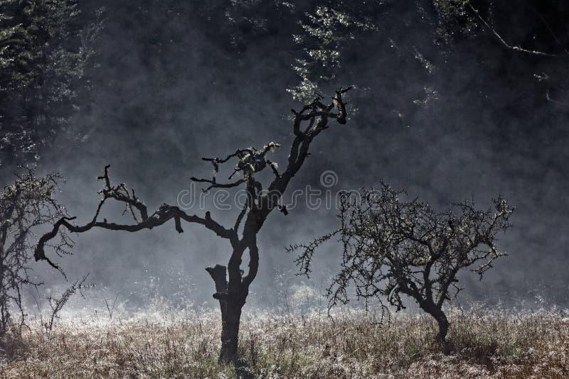 早晨薄雾或一场闷燃的森林火灾与在草由后照的露水 库存图片