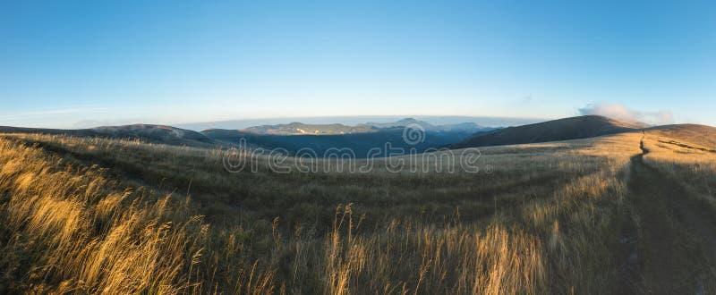 从早晨象草的山土坎的全景 库存照片