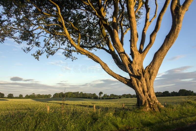 早晨阳光在安特里姆郡-北爱尔兰 库存图片