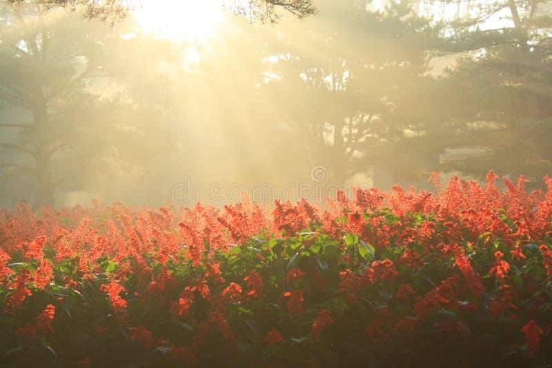 早晨阳光 图库摄影