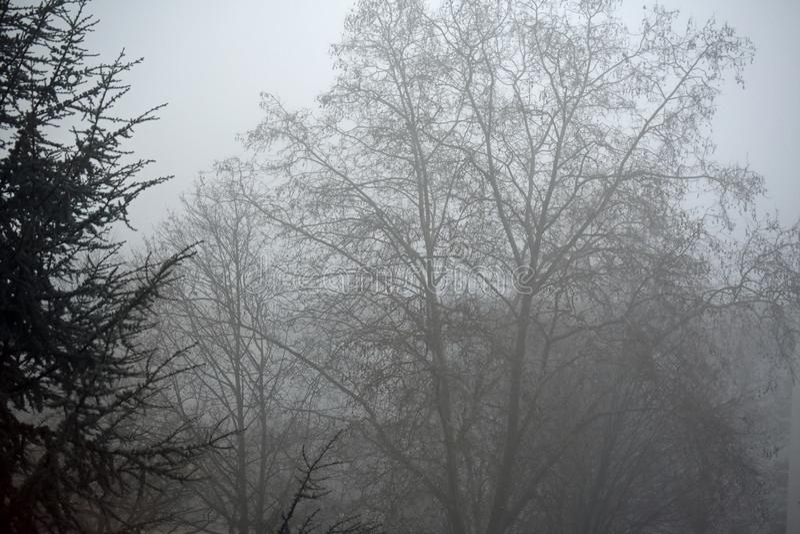 早晨雾在德国-神秘的场面 免版税库存照片