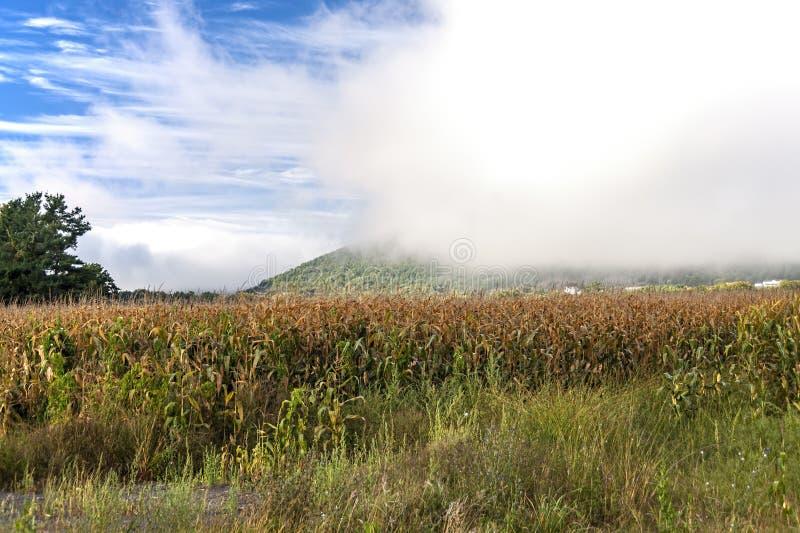 在Schoharie小山的有薄雾的早晨 免版税库存照片