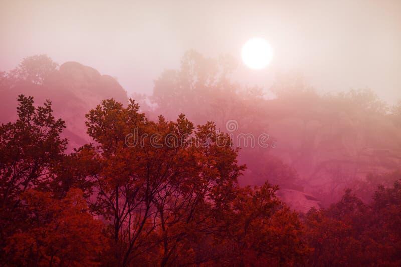 早晨雾在秋天 免版税库存图片