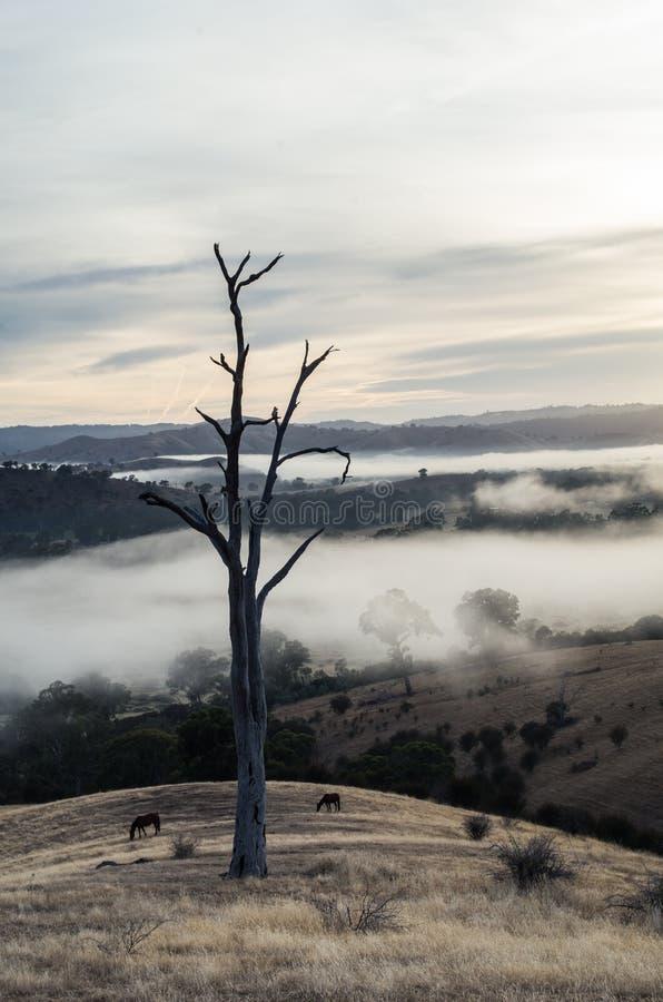 早晨雾在Goulburn河谷在维多利亚,澳大利亚 免版税库存图片
