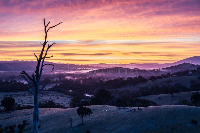 早晨雾在Goulburn河谷在维多利亚,澳大利亚 免版税图库摄影