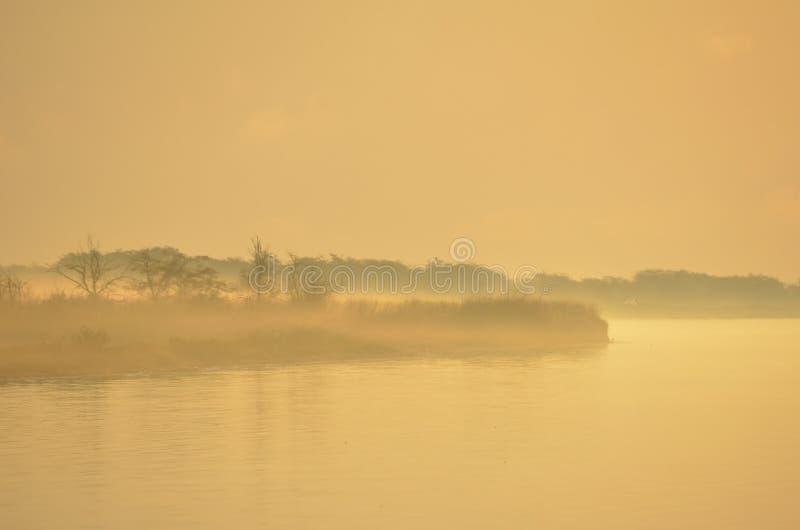 早晨雾的河岸 库存图片