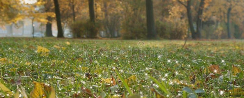 早晨露水在公园 免版税库存图片