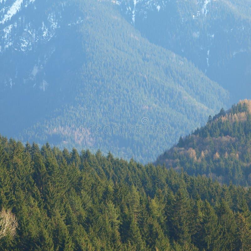 早晨风景与山和在与太阳反射的日出 与白雪的晚上和绿色树和森林 库存图片