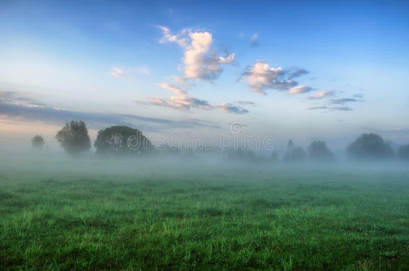 早晨 有薄雾的黎明在一个美丽如画的草甸 太阳光芒 图库摄影