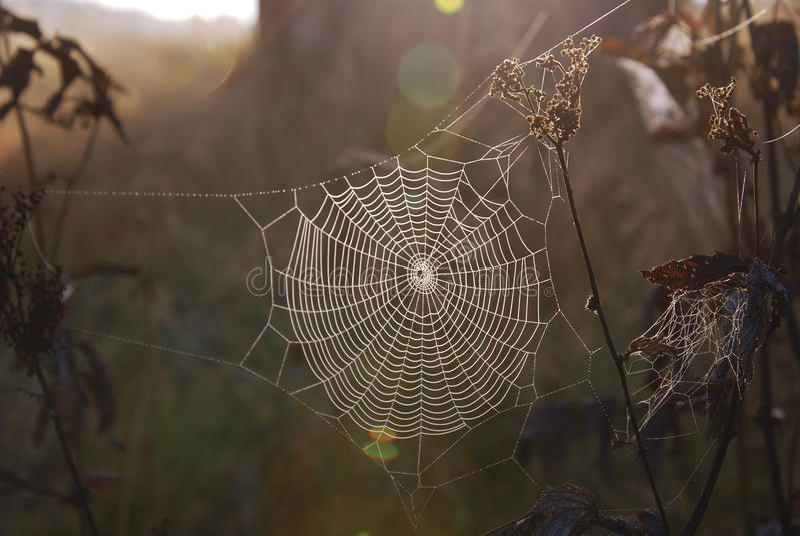 早晨Spiderweb 库存图片