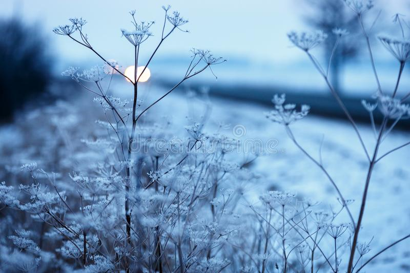 早期的冬天、冷的有薄雾的早晨、草和魅力 免版税库存图片