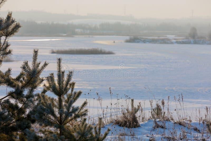 早期的冬天,冷的有薄雾的早晨 图库摄影