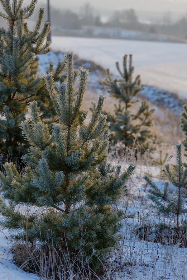 早期的冬天,冷的有薄雾的早晨 免版税图库摄影