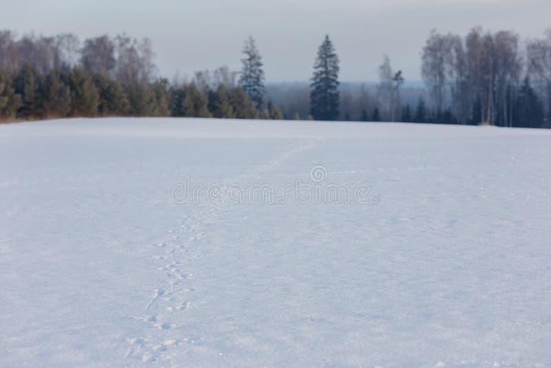 早期的冬天,冷的有薄雾的早晨 免版税库存照片