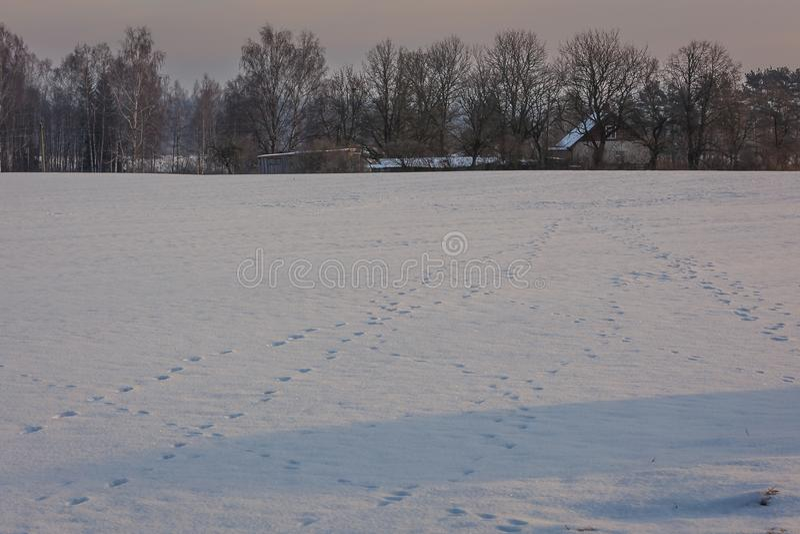 早期的冬天,冷的有薄雾的早晨 免版税库存图片