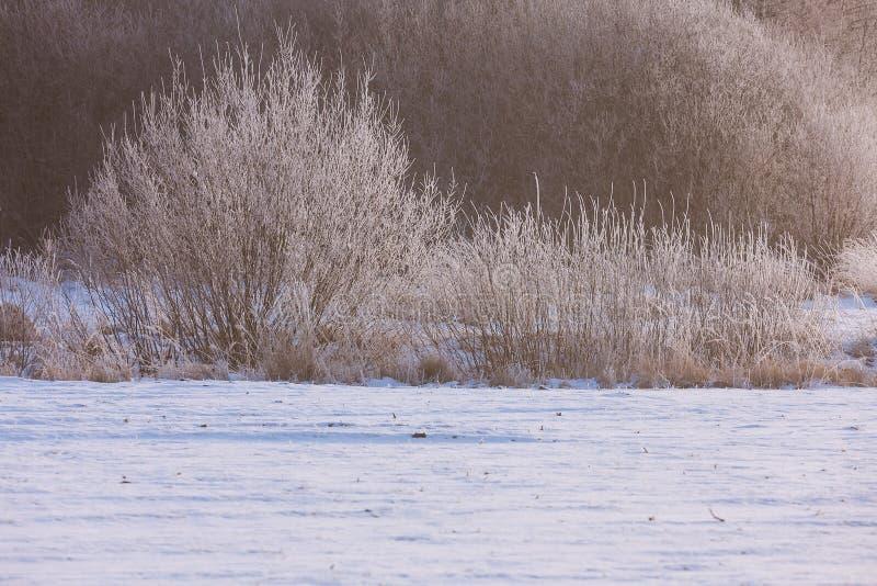 早期的冬天,冷的有薄雾的早晨 库存图片