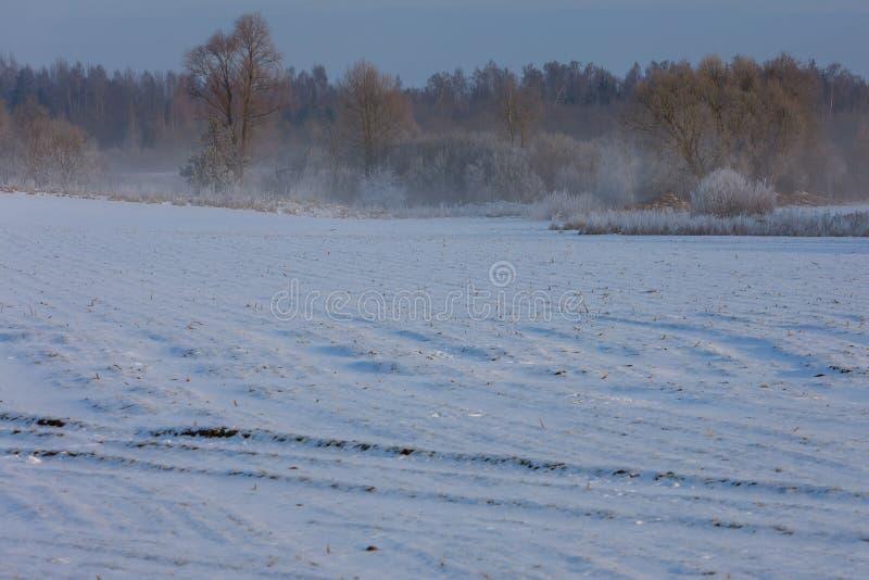 早期的冬天,冷的有薄雾的早晨 库存照片