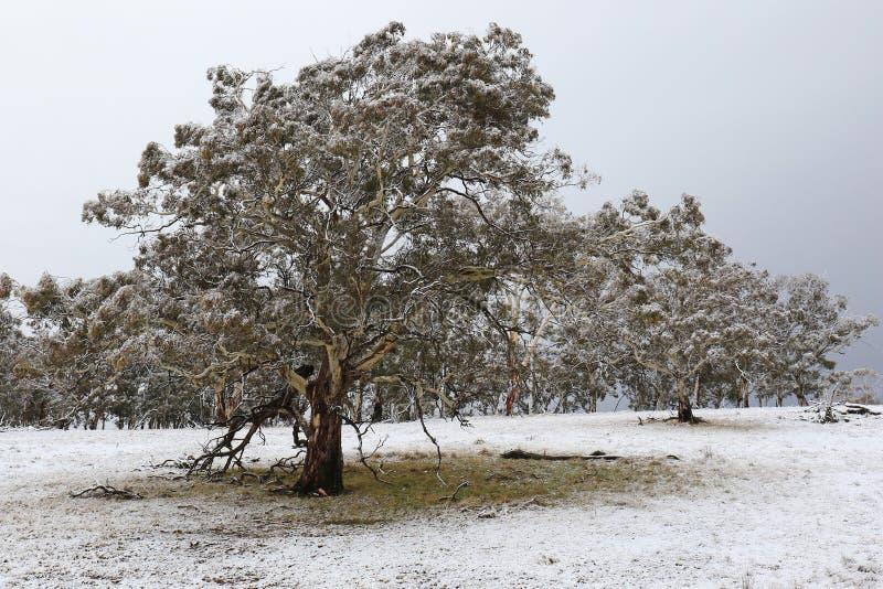 早期的季节降雪 免版税库存图片