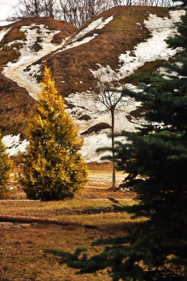 早期的春天在俄罗斯 部分熔化雪和植物盖的地面小山 免版税库存照片