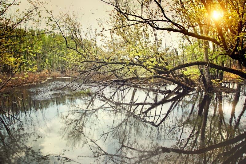 早期的春天沼泽水 免版税库存照片
