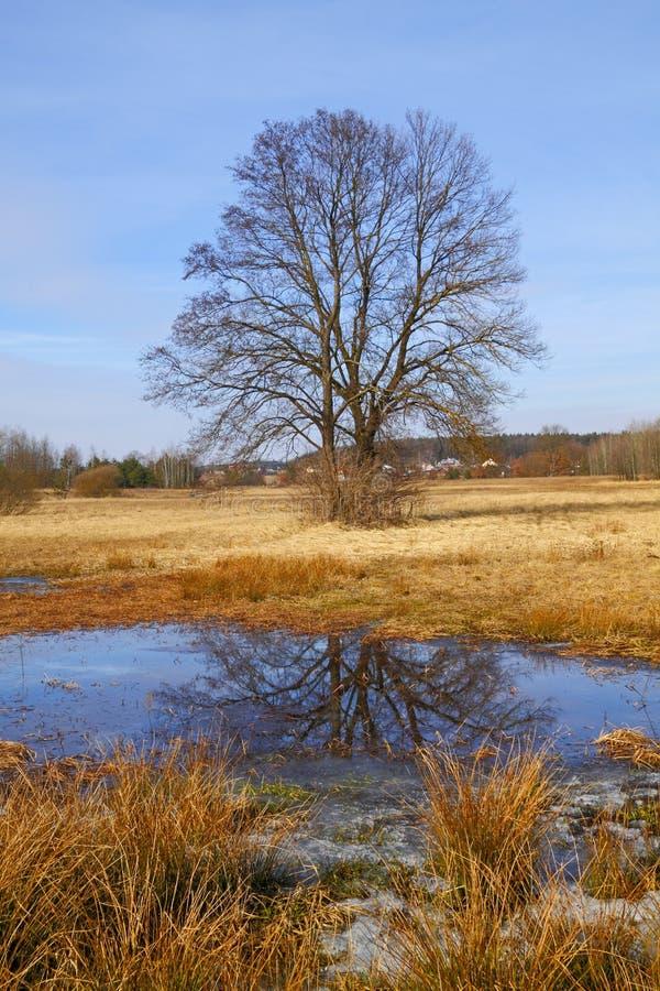 早期的春天的洪水草甸 库存照片