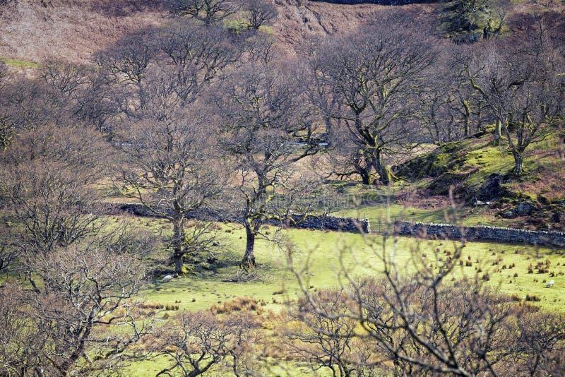 早期的春天的风景威尔士牧场地 免版税库存图片