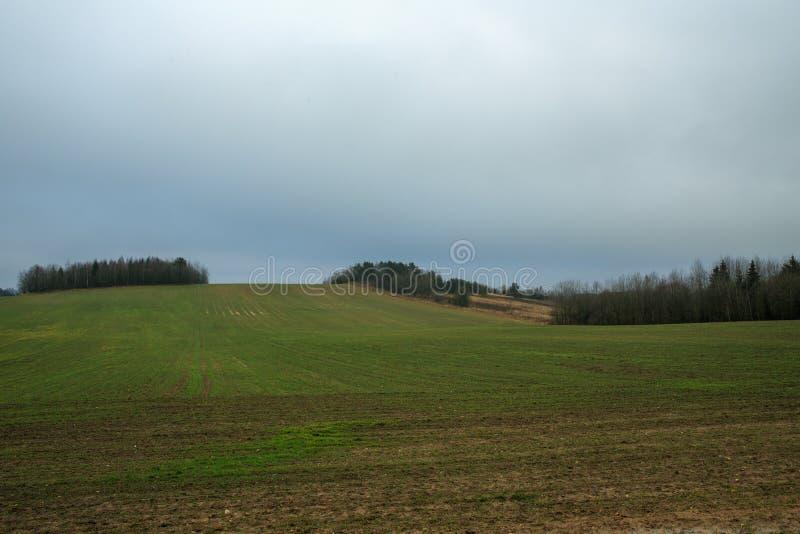 早期的春天美好的风景,绿色领域,有雾的早晨,冬天播种 免版税库存照片