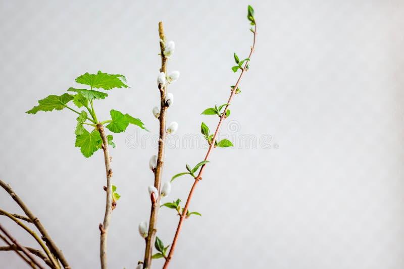 早期的春天,开花的分支在屋子里,创造舒适atmosp 图库摄影