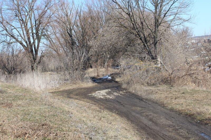 早期的春天 雪在春天熔化,自然 蓝天 树见面春天 熔化的冰 库存图片