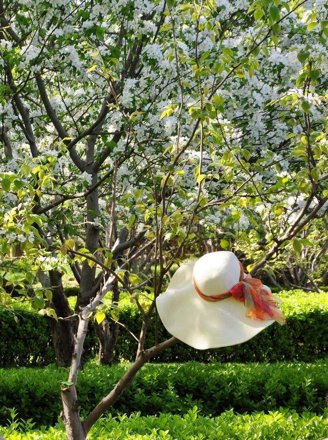 早期的春天 图库摄影