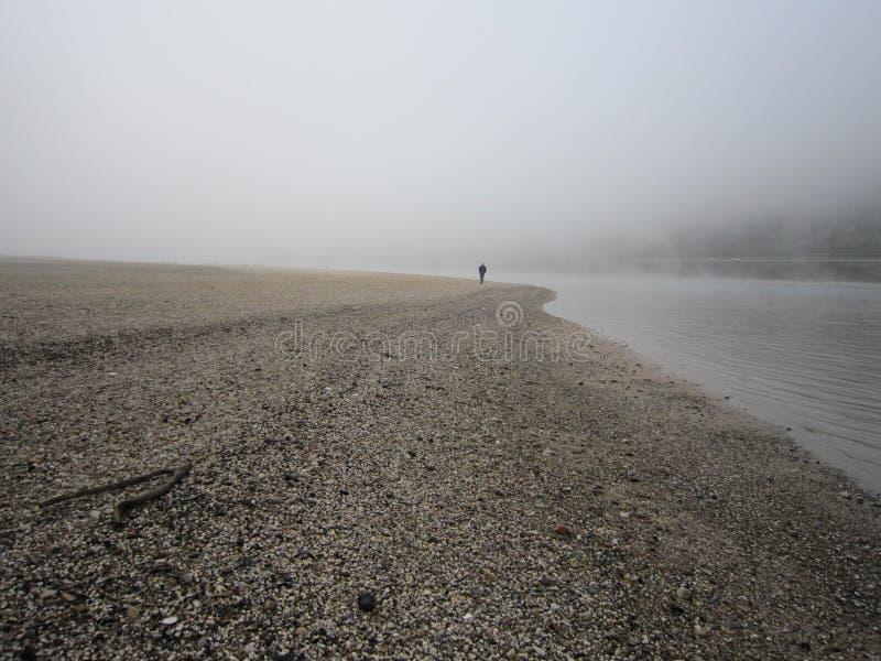 早期的有薄雾的早晨 低水的莱茵河 免版税库存图片