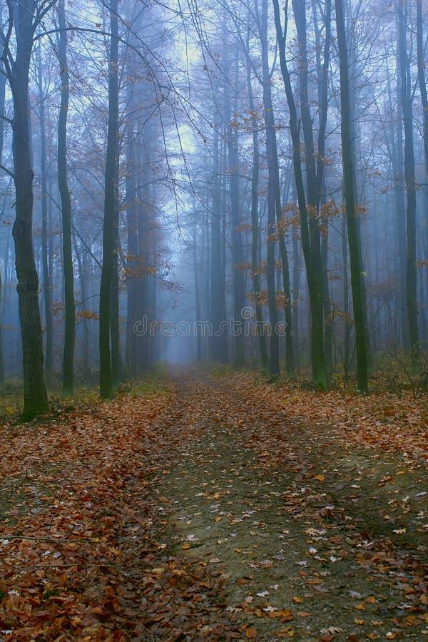 早期的森林早晨 免版税图库摄影
