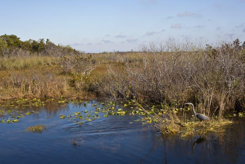 早期的沼泽地早晨natinal公园 免版税库存照片