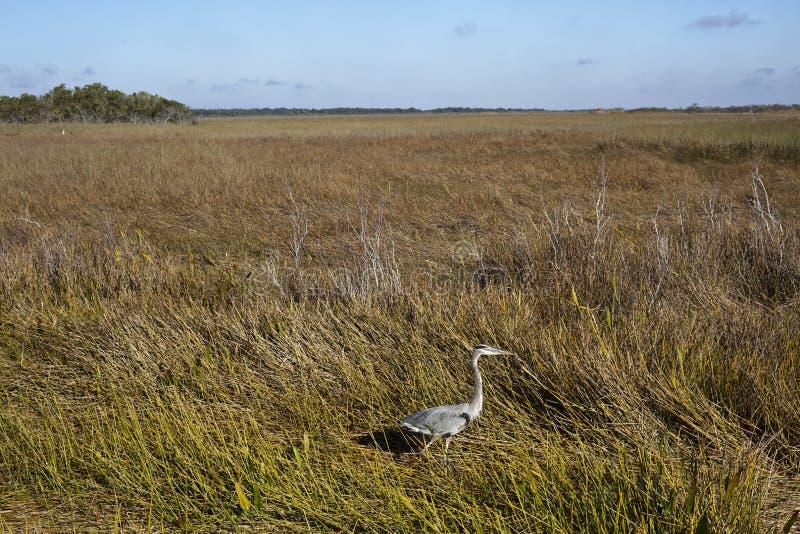 早期的沼泽地早晨natinal公园 库存照片