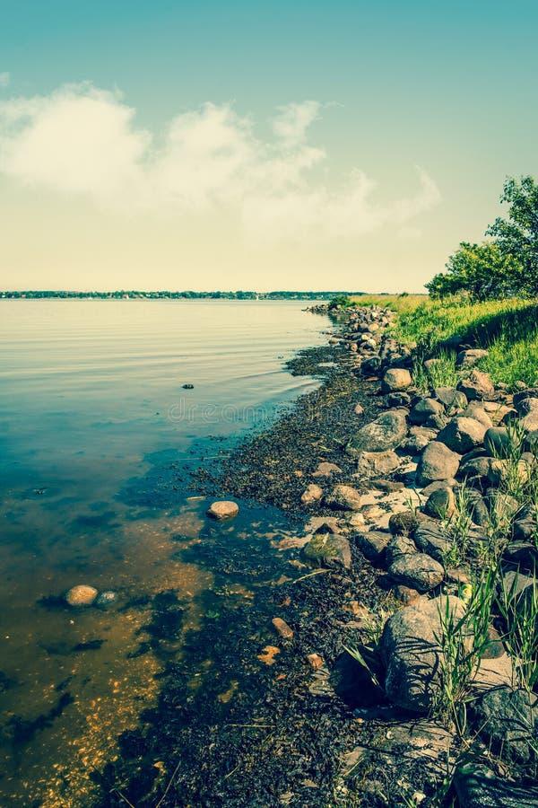早期的湖早晨岸夏天 库存照片