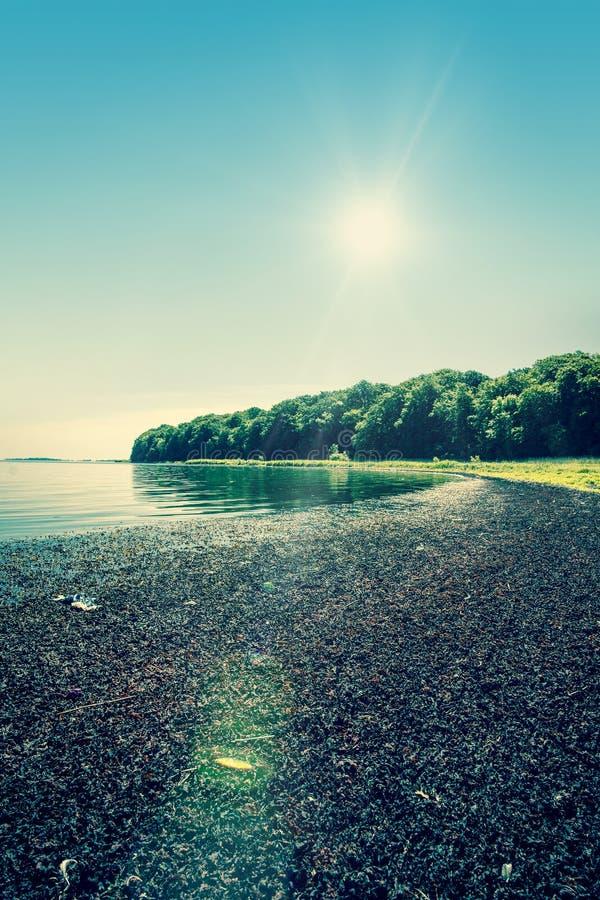 早期的湖早晨岸夏天 图库摄影