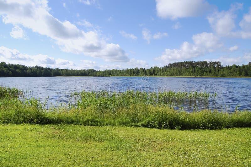早期的湖早晨岸夏天 免版税图库摄影