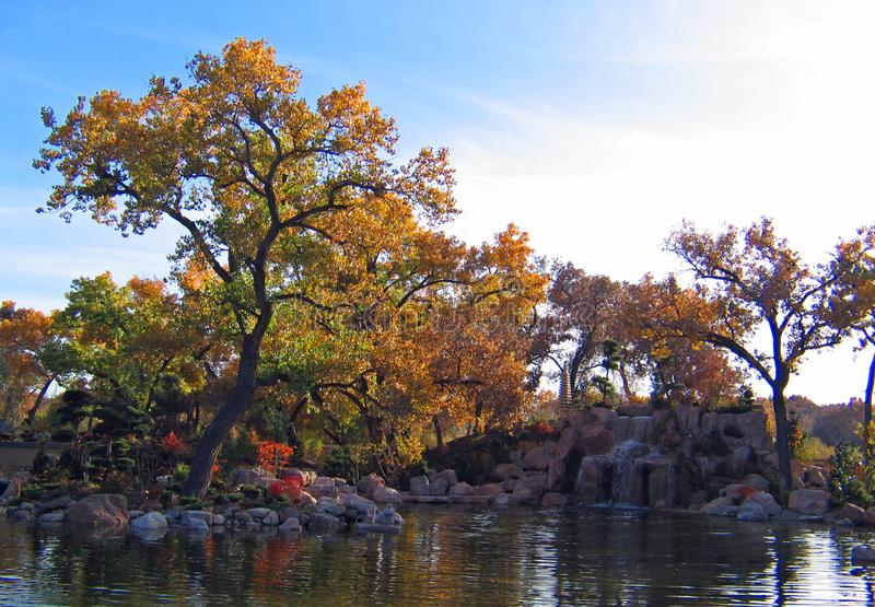 早期的秋天的日本庭院 库存图片