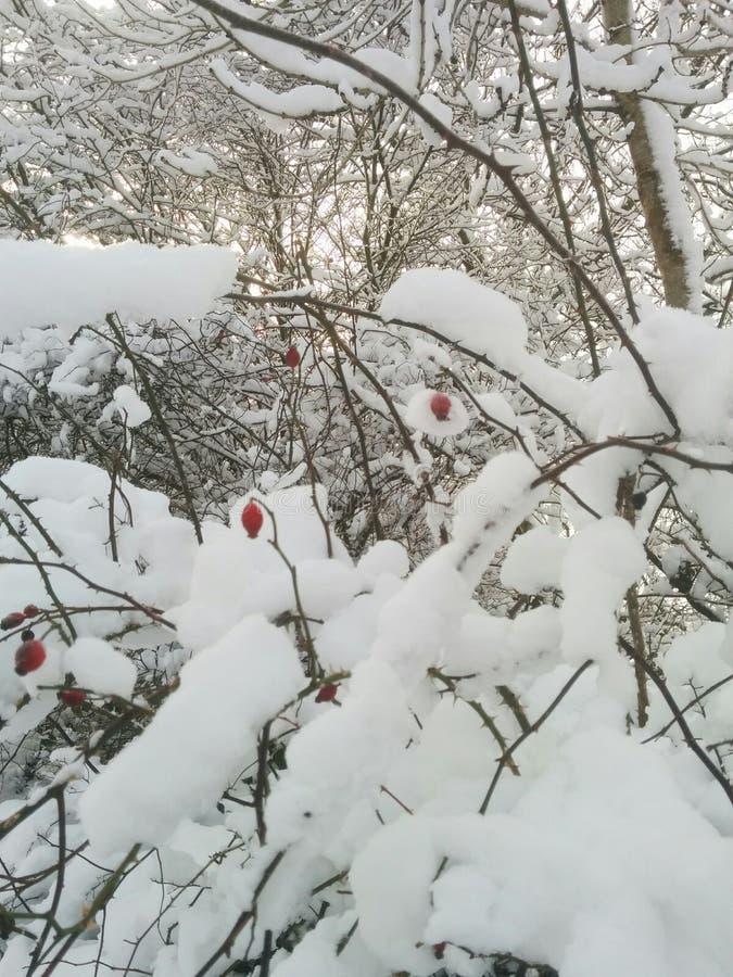 早期的雪 免版税图库摄影