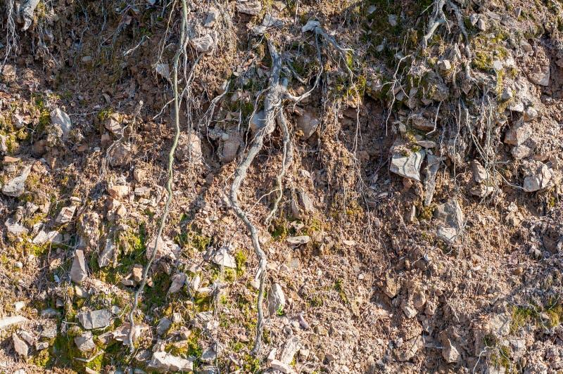 旱田与树的地下水侵蚀根源细节 免版税库存图片
