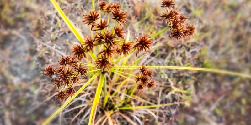 旱田的棘手的植物 库存图片