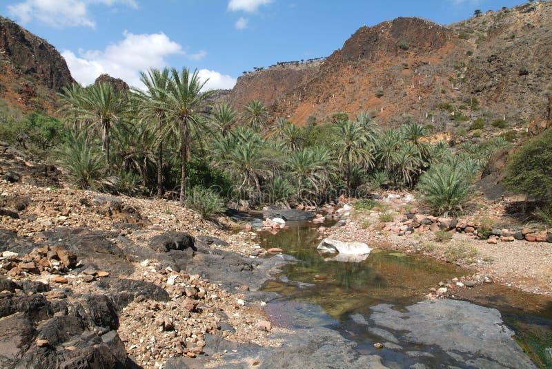 旱谷Daerhu河在索科特拉岛的 库存照片