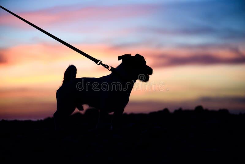 时刻走与与狗剪影的宠物概念在看美好的日落的皮带的 库存照片
