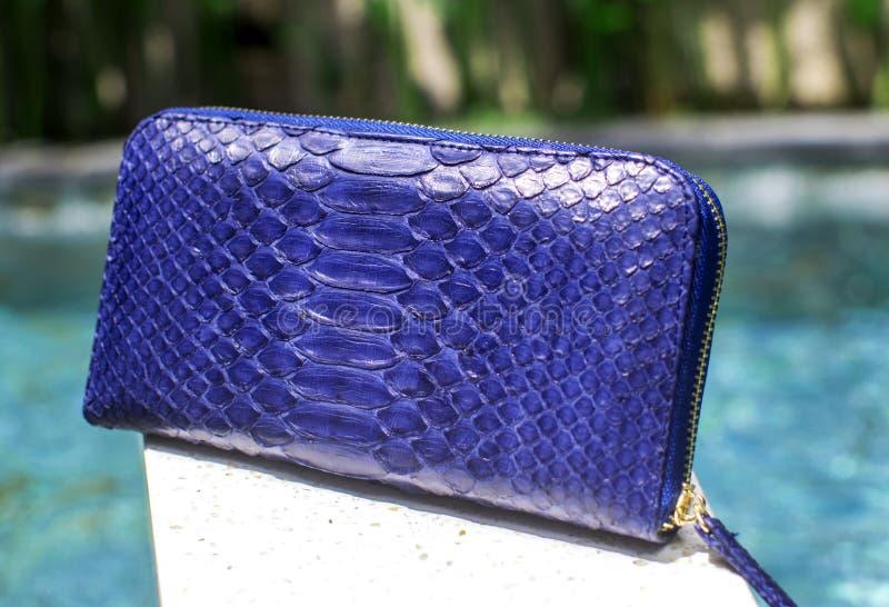 时尚和样式、金钱和储款 泡沫钱包,时兴的Python钱包 Python,岩钉辅助部件 在backgroun的蓝色水池 免版税库存照片