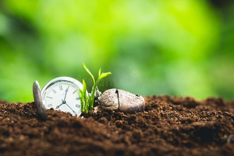 时间成长种子种植种子保护树苗人心果 免版税图库摄影