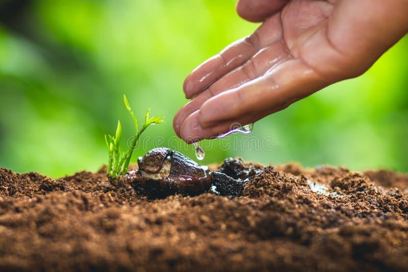 时间成长种子种植种子保护树苗人心果 免版税库存图片
