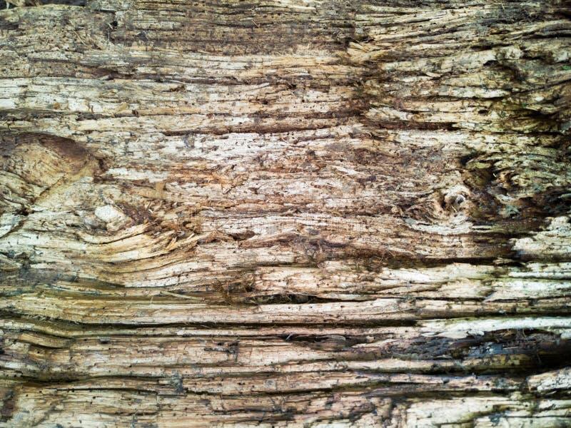 时间腐蚀的表面,老木背景之前 库存图片