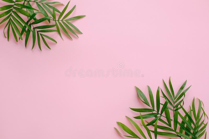 时髦的夏天舱内甲板位置 在桃红色backgr的新棕榈叶边界 免版税库存图片