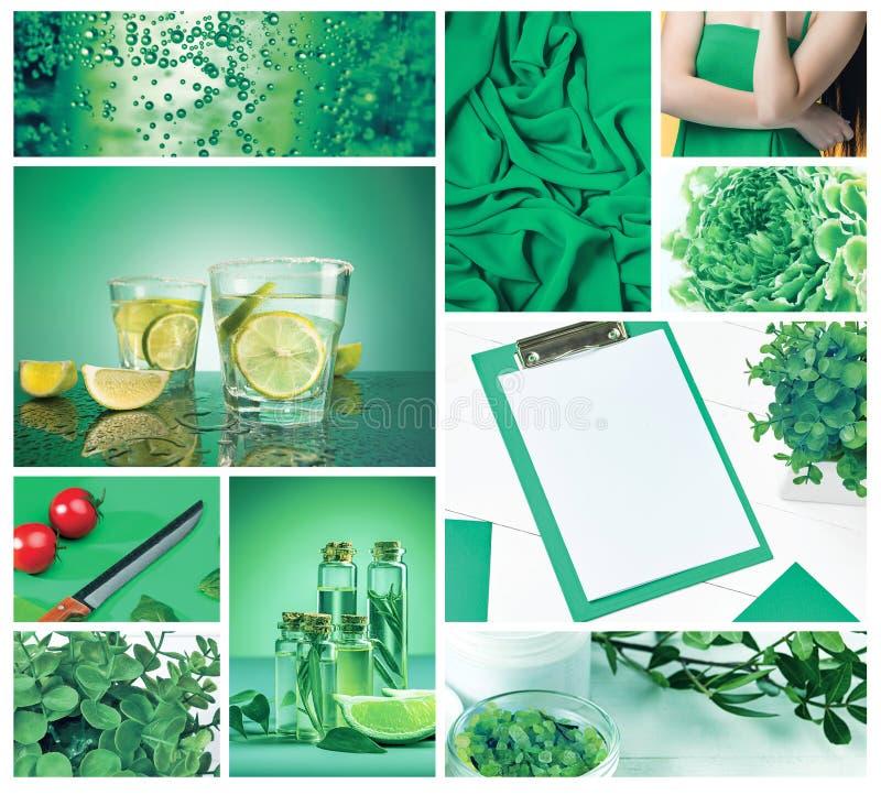 时髦颜色概念 设置与绿叶颜色 图库摄影